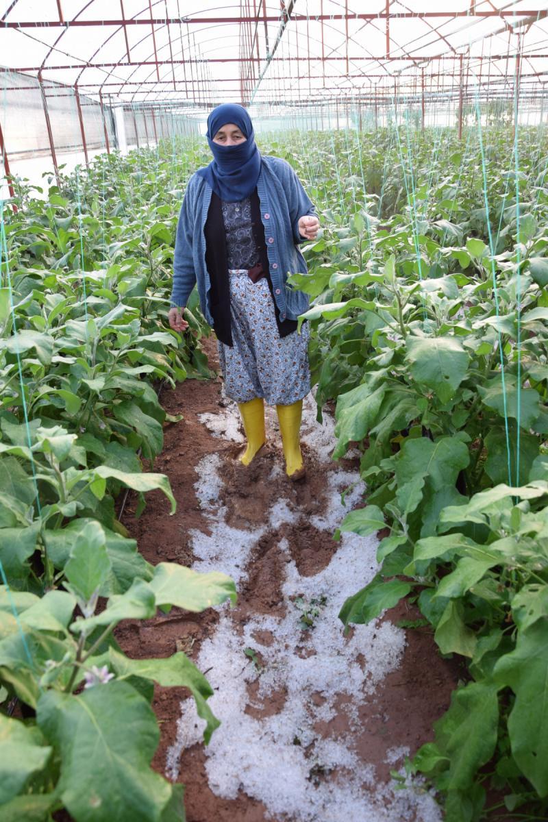 dolu nedeniyle serası zarar gören kadın çiftçinin tepkisi: