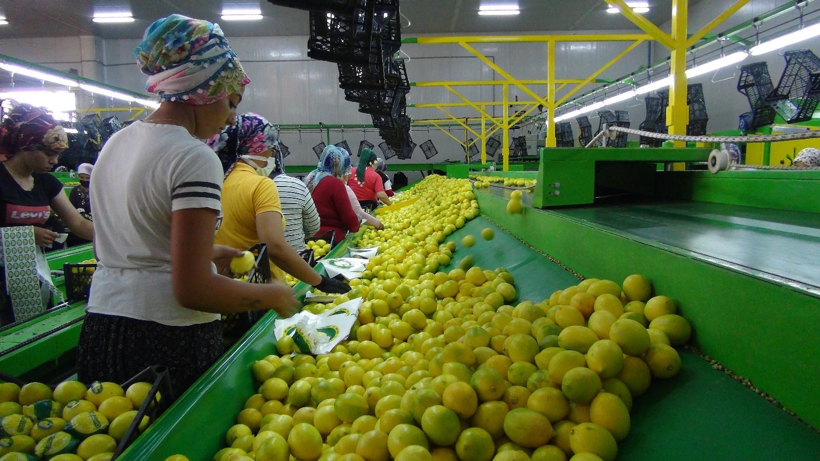 balkan ulkelerine limon ihracati basladi