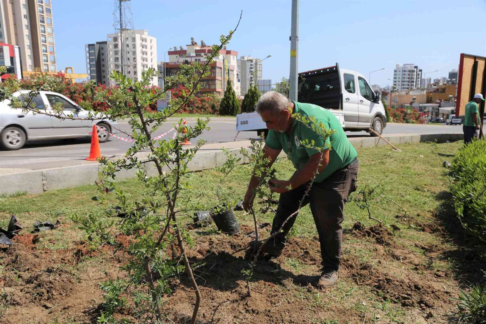 toroslar belediyesi ilcenin cicek ve bitkilerini kendi serasinda yetistiriyor 1270668